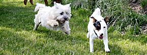 Ingen farlige hunde men mange nye søde legekammerater til din hund.