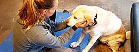 kranio sakral terapi hunde køresyge