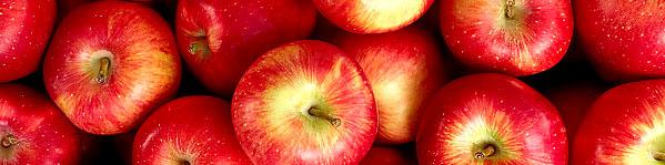 Æbler Vitaminer Rigtig Hundemad