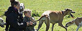 whippet greyhound