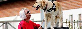 Dog parkour - Shih zsu